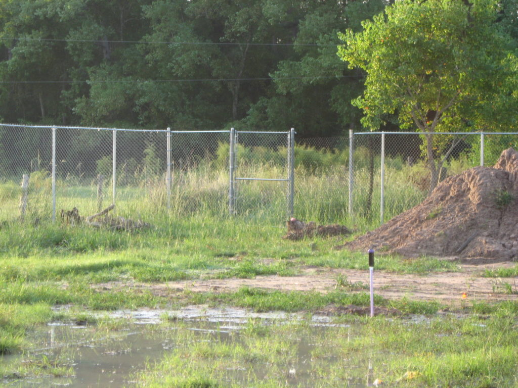 chain link fence in a pearland property